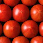 トマトで地方創生